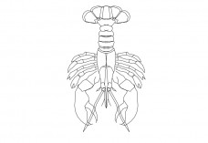 Lobster top view | FREE AUTOCAD BLOCKS
